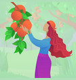 young woman harvesting ripe persimmons vector image vector image