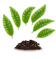 realistic detailed 3d elements set of tea vector image