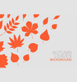 background red autumn leaves vector image vector image