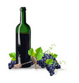bottle of wine with bunches of grapes vector image vector image