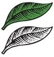 vintage engraved of leaf vector image vector image