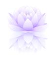 Blue lotus vector image
