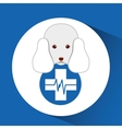 digital pet shop with poodle and clinic symbol vector image