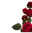 floral red roses leaf and buds vector image vector image