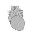 human heart in in drawn line style doodle heart vector image