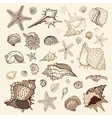 Sea shells collection vector image
