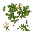 set red rose flower bud and leaves isolated vector image