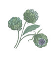bunch of artichokes with green buds stalks and vector image