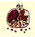 Beautiful juicy pomegranate vector image vector image