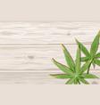 cannabis leaves on wood background hemp leaf on vector image vector image