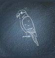 lory parrot icon sketch on chalkboard vector image vector image