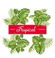 Tropical set of leaves vector image