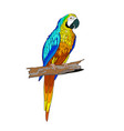 sitting on a branch parrot vector image