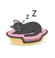 a cat is sleeping in a basket vector image vector image