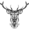 deer sketchy hand-drawn portrait vector image vector image