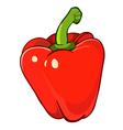 Bulgarian pepper vector image vector image