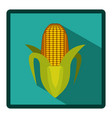 corn cob icon image vector image