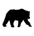 animal wild bear natural fauna pictogram vector image vector image