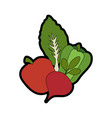 beetroot vegetable icon vector image vector image