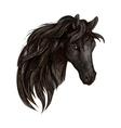 Black horse head watercolor portrait vector image vector image