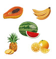 fruit tropical fresh harvest vector image vector image