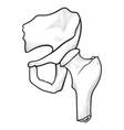 hip bone icon anatomical graphic medical symbol vector image