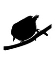 silhouette of a bird nuthatch vector image vector image