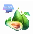 Avocado hand drawn watercolor on a white vector image