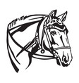 decorative portrait of horse with bridle vector image vector image