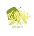 linden blossom flat color vector image