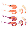 shrimp isoleted on white flat gradient sea food vector image