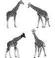 giraffes sketch set vector image