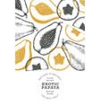 hand drawn sketch style papaya banner organic vector image