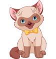 siamese kitten vector image vector image