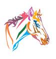 colorful decorative portrait foal vector image vector image