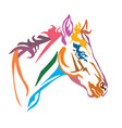 colorful decorative portrait of foal vector image