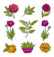 floral hand drawn elements vector image vector image
