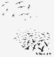 pack of seagulls and of swallows vector image