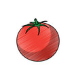 tomato vegetable fresh health raw tasty vector image vector image