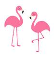 two pink flamingo set exotic tropical bird vector image