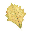 watercolor autumn leaf isolated on white vector image
