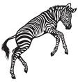 zebra baby vector image