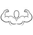 bodybuilder muscle flex arms vector image