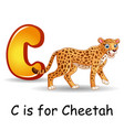 animals alphabet c is for cheetah vector image vector image