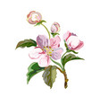 apple flowers vector image vector image