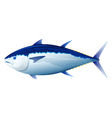 Bluefin Tuna Fish vector image