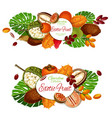 fruits and berries exotic plant tropical palm vector image