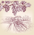 grape vine vineyard grape hand drawn vector image vector image