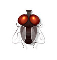 realistic fly retro realistic animal isolated vector image vector image
