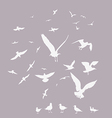 white pack seagulls vector image